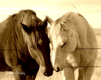 Nebraska Horse Love Lean on Me - Pasture Photo with Barbwire fence. Fine Art Photography and Home Decor
