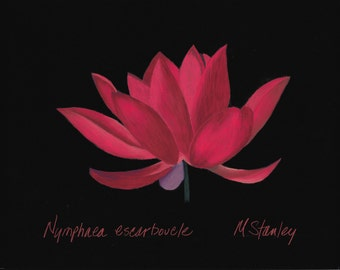 Print of an original pastel drawing of a magenta lotus flower