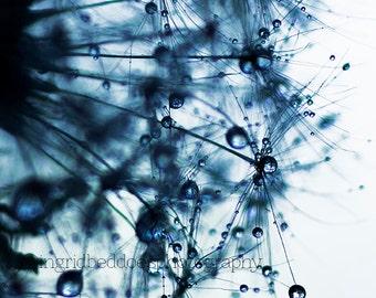 dandelion photography - dandelion art- macro photography - blue dandelion  - flower art print - nature photography - wall decor home decor