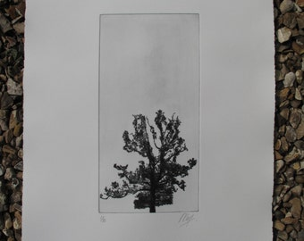 Tree Print, A drypoint print of a silhoutted Oak Tree