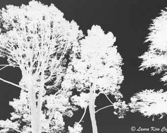 Nature Photography, Tree Photography, Black and White photo, Black Grey White Photography, Wall Decor