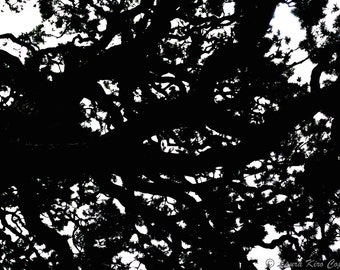 Nature Photography, Black and White Photos, Tree Photograph, Leaves, Black and White Photo, Wall Decor