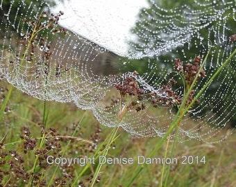 Ireland - Morning dew in Ireland