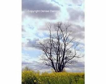 Kentucky - Tree Silhouette