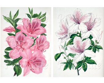 AZALEA instant download, wedding clipart, digital flowers, pink JPG digital download no.011