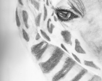 Drawing of a giraffe: Graphite on paper