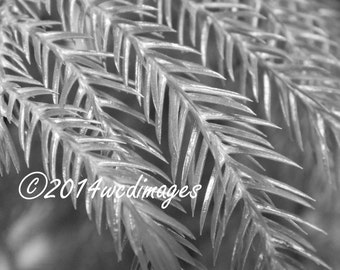 Digital Art Photography Black and White Fern Leaves Home Office Decor