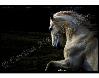 "Equine Fine Art Horse Photography Cheval Etalon Photographie d'Art : ""Eagle's Spirit"" Stallion"