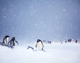Penguins at Trinity Island, Antarctica - Fine Art Photograph (Matted)