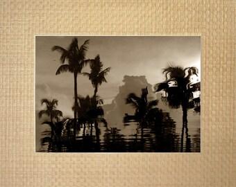 Paradise Palm Reflections - Paradise Island, Bahamas