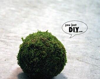 """4"""" Moss Kissing Balls Green Pomander Sphere"""