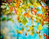 December - colorful nature print - fog photography - snow - home decor - autumn foliage