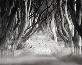 The Dark Hedges, Spooky TREES, Northern IRELAND, Surreal Landscape, Forest Scene, RAVEN, Tree Canopy Road, Flying Blackbirds, Superstition