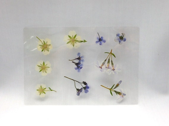 Laminated Pressed Flowers ~ Pressed laminated dried flowers sheets card embellishment
