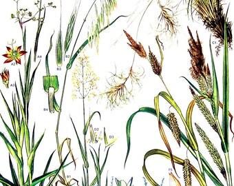 European Grasses - Wild Flowers Botanical Print - 1988 Vintage Flower Print