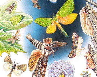 Butterflies and Moths -  1985 Butterfly Book Page - World Butterflies Book - 12 x 8
