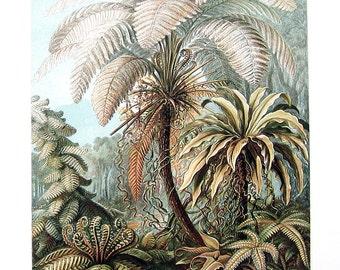 Ferns, Peripylea - Haeckel Art - 1990 Vintage Book Plate
