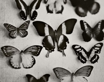 Black and White Photography, Butterfly Photo, Butterflies, Nature Photography, Dark Art, Halloween Art, Surreal, Insects, Dramatic,