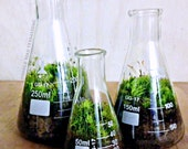 Science Beaker Terrarium Set / Industrial Decor / Flask Planters / Office Gift Set for Him