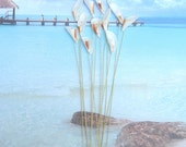 One Dozen Seashell Stems - Sealilies - 12 Ivory Lily Seashells With a Touch of Color for Wedding Bouquets Bridal Bouquets