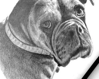 Custom graphite pencil pet portrait