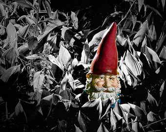Garden Gnome among Lilies of the Valley Plants No.0047BWSC A Black and White with Selective Color Fine Art Nature Photograph