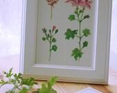 watercolor botanical print of Geranium, plant print, flower illustration,wall art