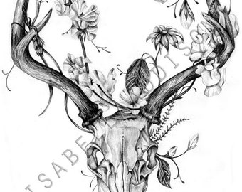 65 furthermore Tattoo design furthermore Buck Head together with Ram in addition Deer Skull Drawing. on deer head tattoos