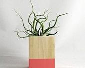 Coral // Wood Air Plant Planter - with Tillandsia Bulbosa