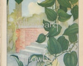 Smilax. 1926 country cottage garden old fashioned botanical color lithograph print
