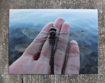 Dragonfly Photo Postcard / Nature Photography Postcard