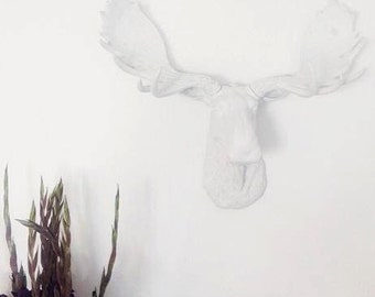 White Moose Head - White Antlers  - Faux Taxidermy Moose M0101
