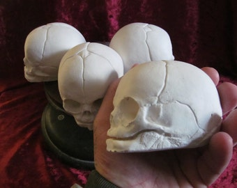 Fetal skull replica for you to paint as you wish D.I.Y skull
