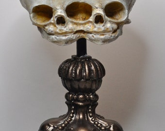 Conjoined Twins Fetal Skull Display