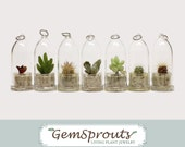 End of Season Sale - 3 Pack of Tiny Plant Capsules, Secret Surprise GemSprout, Mystery Gift, Discount, Tiny Cactus, Mini Plant, Misfit Sale
