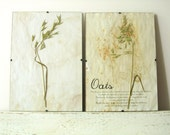 Pressed Flowers- Oats in Frame (3)