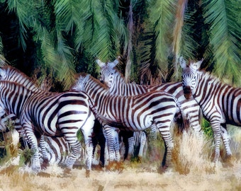 Zebras Serengeti National Park, Tanzania, Africa, African Home Decor, Safari, African Art Prints, Animal Art, Safari Animals