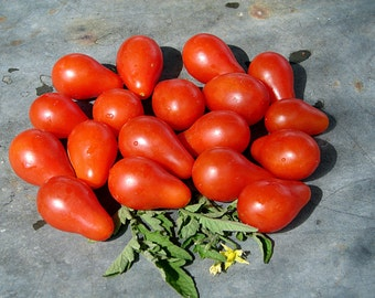 Red Pear  Heirloom Tomato Seeds Non GMO