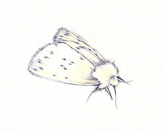 "White Moth art print of an original drawing available 5x7"" or 8x10"""
