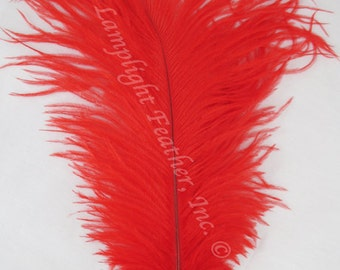 "Ostrich feather, Red, 8-12"",  per each (ossred)"
