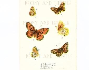 Antique Butterfly Print, Art, Small Butterflies, Niobe fritillary, Heath fritillary, Chromolithograph, Orange butterfly, Schmetterling