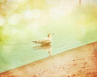 Seagull Photography Fine Art Print, Beach Vintage Home Decor, Bird Wall Art - Summers Dip Print