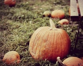 The Great Pumpkin 5x7, 8x10, or 8.5x11 - October Trends - Halloween Decor - Rustic Home - Fall Photography - Nature - Food - Country Kitchen