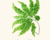 Printable art vintage fern wall decor instant download a4 jpeg - Lebonprintables