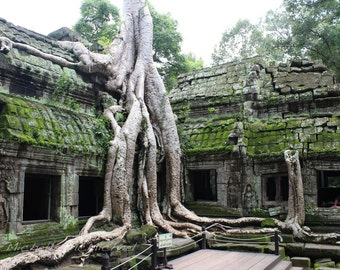 Travel Photography, 8x12 Fine Art Print, home decor, Cambodia temple, green and grey, jungle