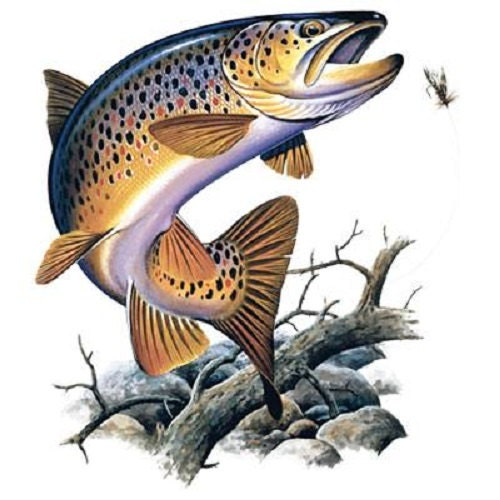 Jumping Brown Trout Fishing T Shirt By Alwaysinstitchesco