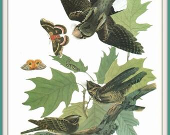 Audubon Bird Art Print, Whip Poor Will, Butterflies,19th Century Artwork, Vintage Art, 1970s Lithograph, Wall Art, Home Decor, Wildlife