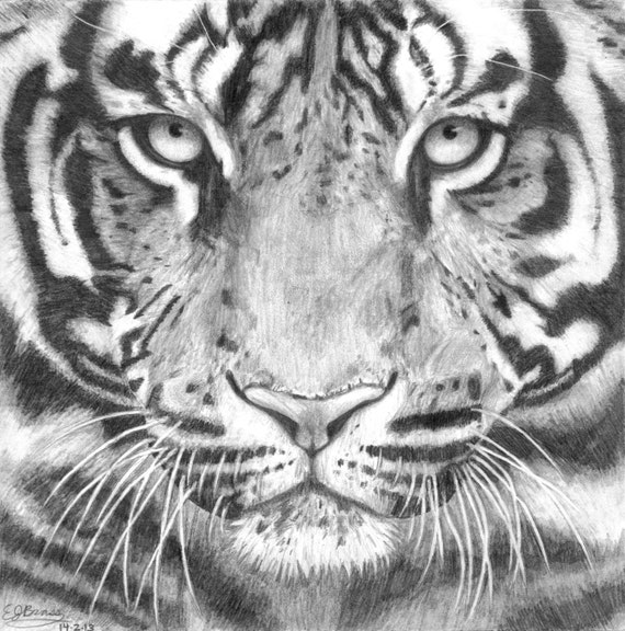 Tiger Face Black and W...