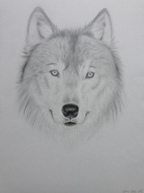Articoli simili a wolf original pencil drawing 9x12 su etsy for Lupo disegno a matita