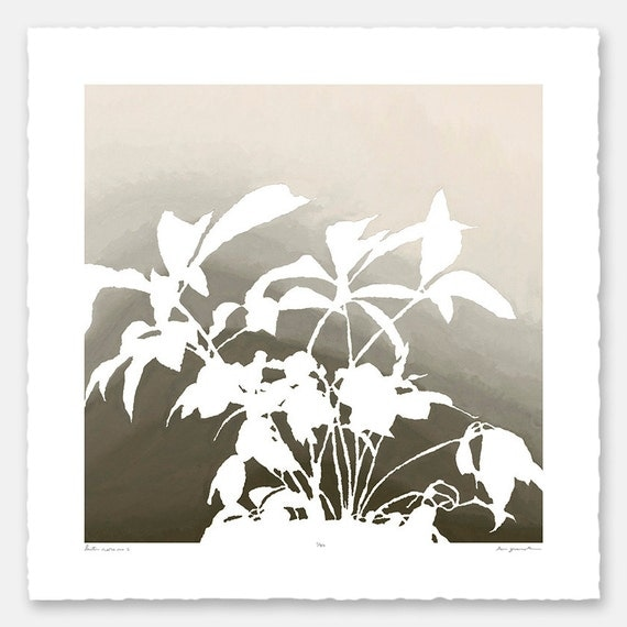 Limited edition botanical print with hand torn edges - Lenten Rose No. 2